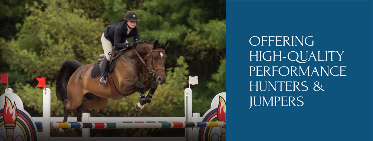 Offering High-Quality Performance Hunters & Jumpers
